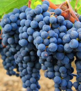 Marselan druif